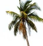 Árvores verdes no fundo branco Imagem de Stock Royalty Free