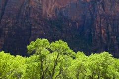 Árvores verdes, penhascos vermelhos imagem de stock