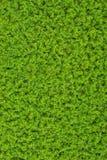 Árvores verdes pequenas na superfície da água Foto de Stock