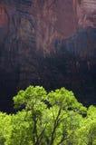 Árvores verdes, rochas vermelhas fotos de stock