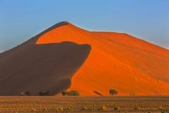 Árvores vermelhas da duna e do camelthorn de areia Fotos de Stock Royalty Free