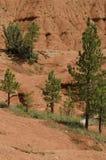 Árvores vermelhas do verde do solo Imagens de Stock Royalty Free