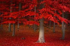 Árvores vermelhas na floresta