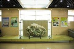 Ásia China, Pequim, museu geological, salão de exposição interno Foto de Stock Royalty Free