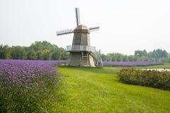 Ásia, China, Pequim, shunyi floresce, move, paisagem do jardim, moinhos de vento, bonariensis do Verbena Imagem de Stock