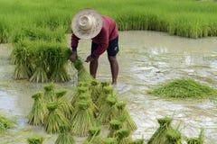 ÁSIA TAILÂNDIA ISAN AMNAT CHAROEN Imagens de Stock