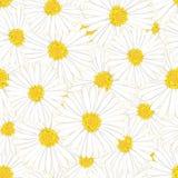 Áster branco, Daisy Flower Seamless Background Ilustração do vetor ilustração do vetor