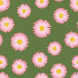 Áster cor-de-rosa, Daisy Seamless no fundo verde Ilustração do vetor ilustração do vetor