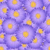 Áster roxo, Daisy Flower Seamless Background Ilustração do vetor ilustração royalty free
