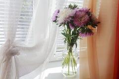 Ásteres em um vaso de vidro em uma soleira Foto de Stock Royalty Free