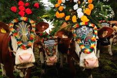 Áustria: Três vacas decoradas em Pertisau foto de stock
