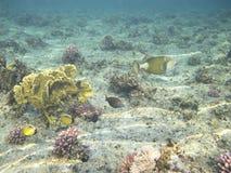 Ââbass del mar Imagen de archivo