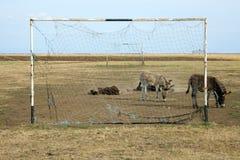"""""""Equus asinus"""" Stock Image"""