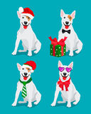 Bullterrier dog in a New Year hat Royalty Free Stock Images