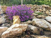 †‹alpiner Balsam, Erinus-alpinus stockfotografie