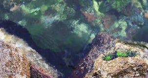 """€ de la escena de la tranquilidad """"oscila en que la parte inferior del mar en fondos bajos del vídeo de las vacaciones de verano almacen de metraje de vídeo"""