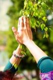 """€ del rezo de la primavera """"que adora los poderes curativos de la primavera, árbol en manos Imagenes de archivo"""