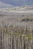 """€ des verheerenden Feuers """"brannte Bäume im Wald in USA Lizenzfreie Stockfotos"""