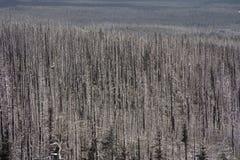 """€ des verheerenden Feuers """"brannte Bäume im Wald in USA Lizenzfreies Stockfoto"""