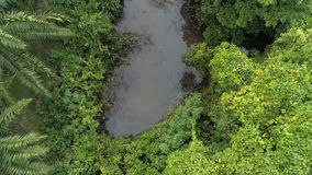 •Lake in the rainforest. Top view. Aerial. Thailand. stock video