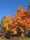 04_10_2_032 de lames d'automne Images libres de droits
