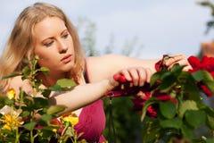 del jardín que hace el trabajo que cultiva un huerto con las rosas Fotografía de archivo