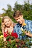 del jardín que hace el trabajo que cultiva un huerto con las rosas Foto de archivo