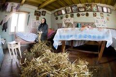 Gutsulka clasifica las vainas de haba Fotografía de archivo