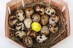 kwartelsei en gouden die ei in de mand op witte bedelaars wordt geïsoleerd Stock Fotografie