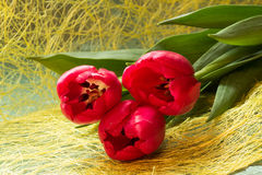 three red tulips. On a yellow background Stock Photo