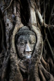 âBuddhahuvud & Tree av buddhaâ Arkivbild