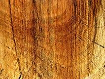 Âge d'un arbre Photographie stock libre de droits