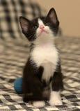 Âge de chaton un mois Photographie stock