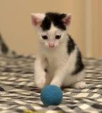 Âge de chaton un mois jouant la boule Image stock