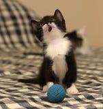 Âge de chaton un mois jouant la boule Images libres de droits