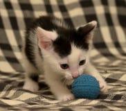 Âge de chaton un mois jouant la boule Image libre de droits