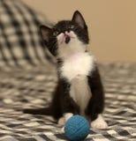 Âge de chaton un mois jouant la boule Photographie stock