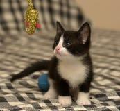 Âge de chaton un mois jouant la boule Photos libres de droits