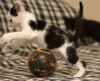 Âge de chaton un mois jouant la boule Photo stock