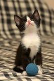 Âge de chaton un mois jouant la boule Photo libre de droits