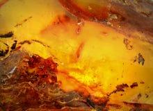 Âmbar Báltico, segmentos da resina Imagem de Stock Royalty Free