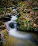 Âme de forêt Photographie stock
