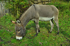 Âne Photos stock