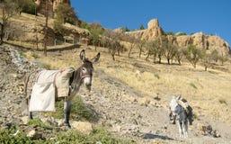 Âne avec la cargaison sur le sien de retour dans les montagnes image libre de droits