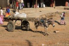 Âne avec un chariot Images libres de droits