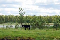 Âne en parc de Grutas près de ville de Druskininkai Images stock