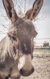 Âne espiègle au refuge pour animaux Photos stock