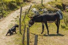 Âne et chien essayant de sentir par une barrière Images stock