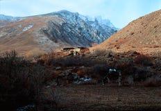 Âne frôlant dans les montagnes photo stock