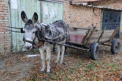Âne gris et chariot vide Photographie stock